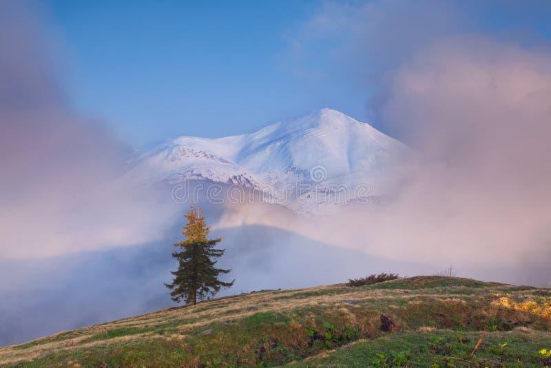 предыдущая весна гор стоковые фото