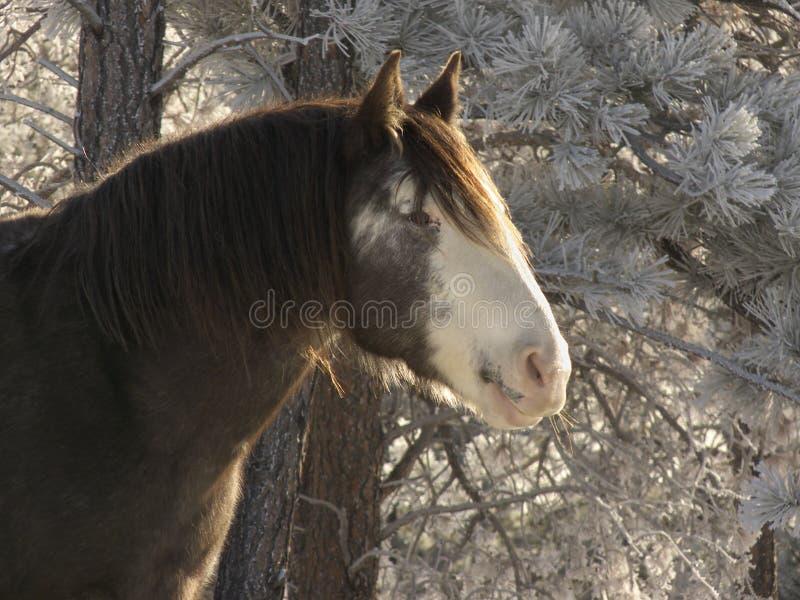 предыдущее утро лошади стоковое изображение