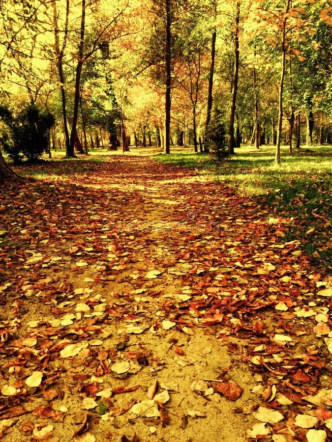 Предыдущий путь парка зимы стоковое изображение rf