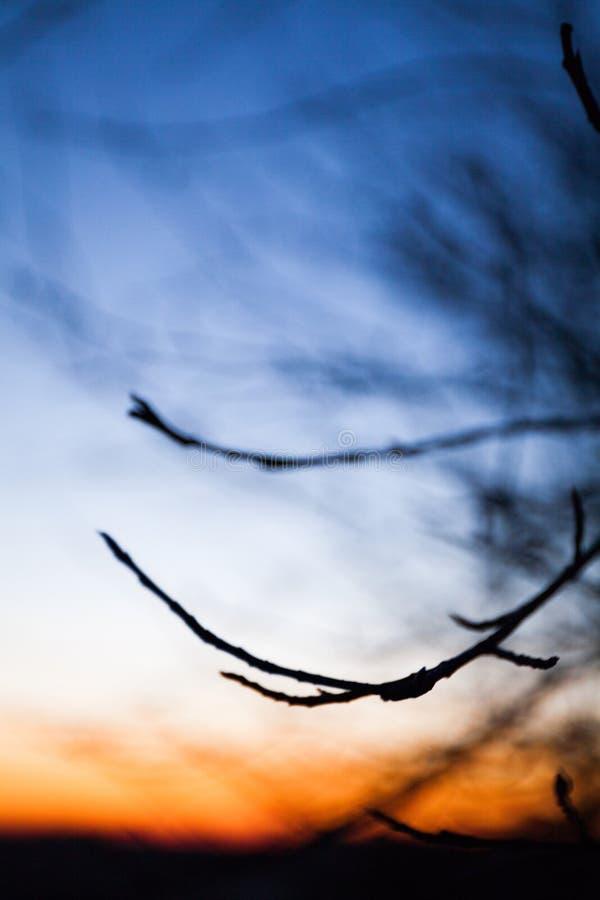 Предыдущий рассвет и силуэты ветвей дерева r стоковое изображение