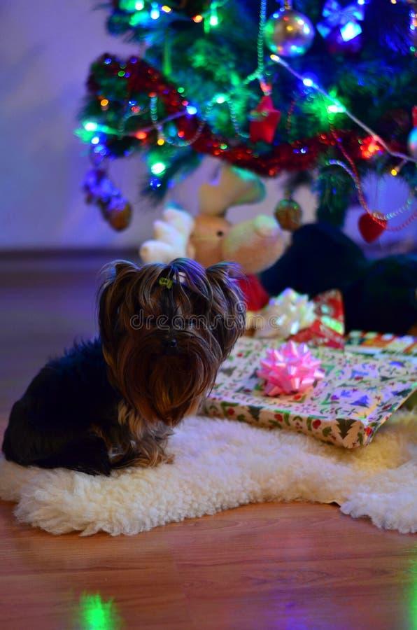 Презрительная собака стоковое изображение rf