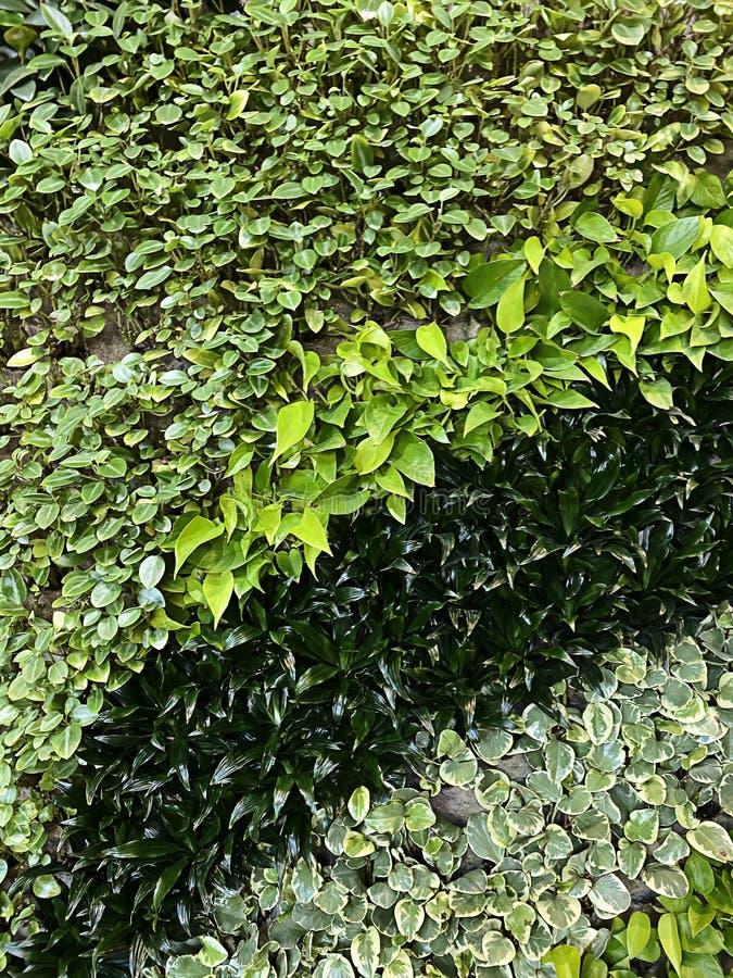 Прекрасная живая стена с зелеными растениями разных цветов стоковая фотография rf