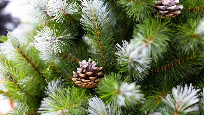 Прекрасная рождественская елка с зелеными иглами, покрытыми снегом и естественными конусами Искусственный шприц с конусами для стоковые изображения rf