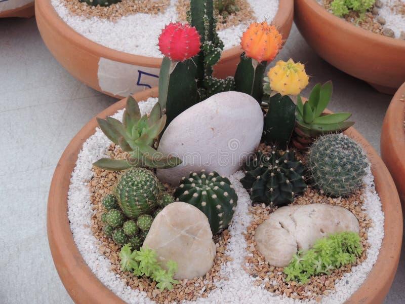 Прекрасные кактусы стоковое изображение