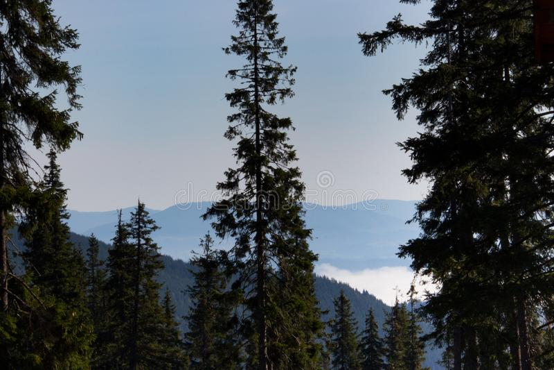 Прекрасный вид гор Карпат с высоким передним планом хвойных деревьев Горы леса с облаками и туманом стоковые изображения rf