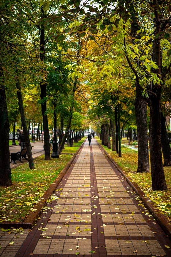 Прекрасный осенний парк Осень в Москве Падение деревьев и листьев Альбомная осень Парк в осени Лес осени стоковое изображение