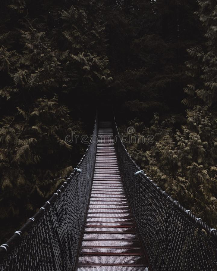 Прекрасный снимок деревянного подвесного моста, ведущего к темному таинственному лесу стоковое изображение rf