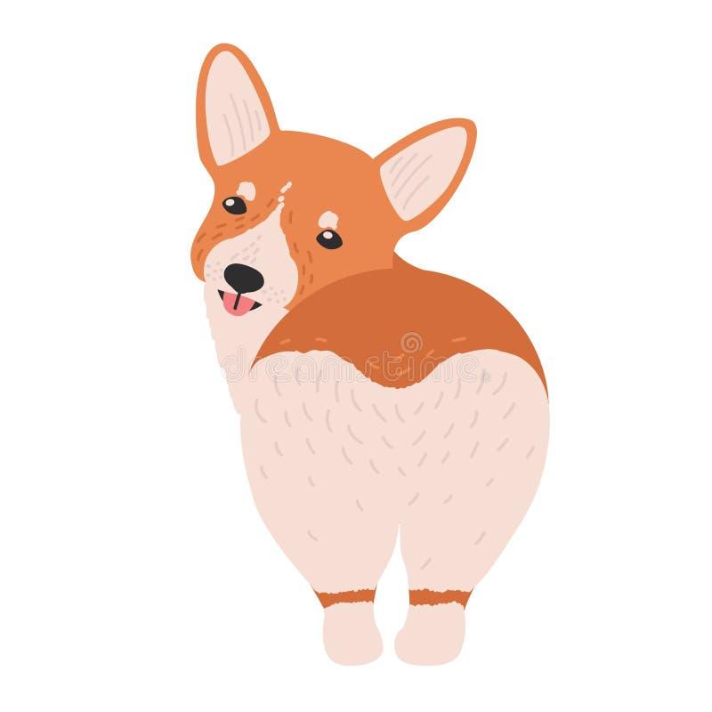 Прекрасный corgi валийца Пембрука Смешная прелестная собака или щенок табунить породу изолированные на белой предпосылке Милое чи бесплатная иллюстрация
