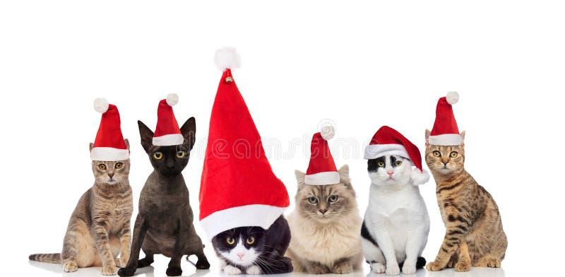 Прелестная группа в составе 6 котов santa сидя и стоя стоковые фото