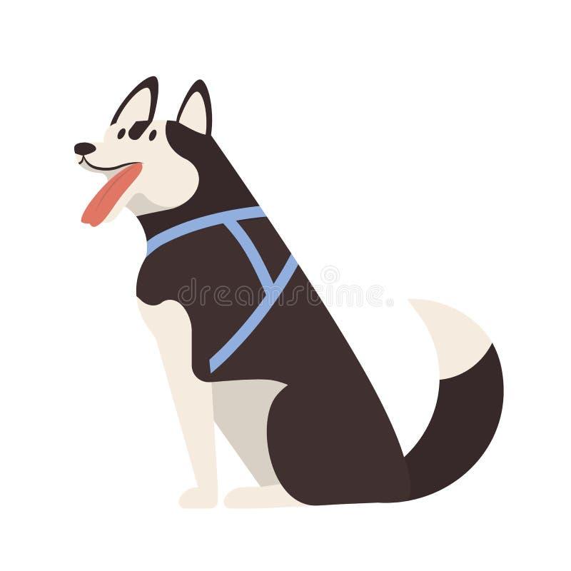 прелестная лайка Сидя милая прелестная чистоплеменная собака скелетона или проводка щенка нося изолированная на белой предпосылке иллюстрация вектора