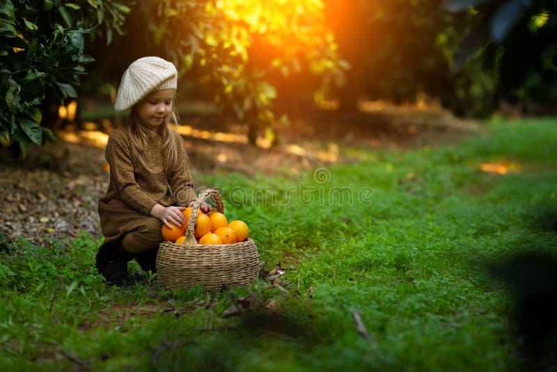 Прелестная маленькая девочка выбирая свежие зрелые апельсины в солнечном оранжевом дереве садовничает в Италии стоковые фото