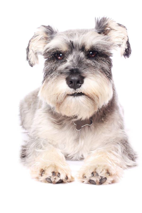 прелестная собака немногая стоковые изображения