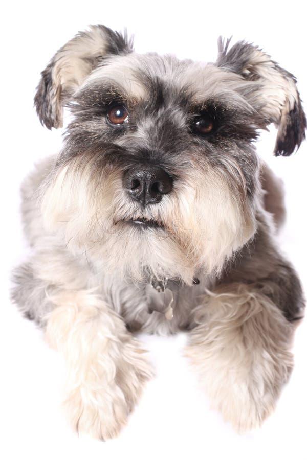 прелестная собака немногая стоковые фото