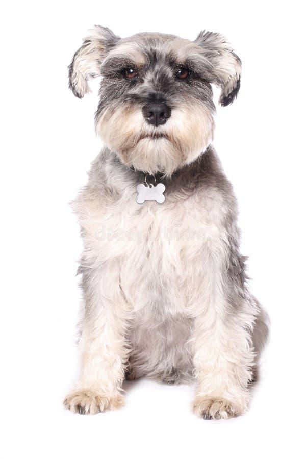 прелестная собака немногая стоковая фотография rf