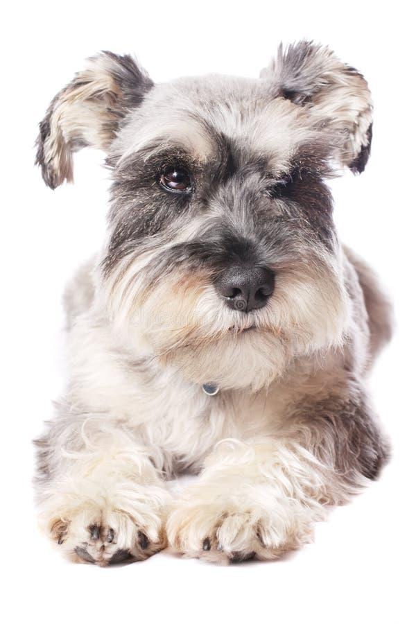 прелестная собака немногая стоковое фото rf