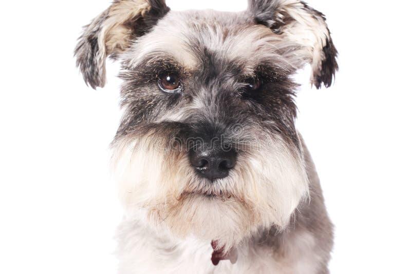 прелестная собака немногая стоковые изображения rf