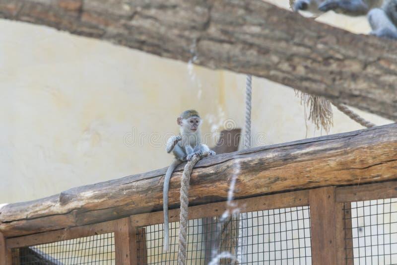 Прелестная сторона обезьяны младенца азиатской Молодая обезьяна сидя на старом журнале Концепция ухода за животными Животные млад стоковая фотография rf