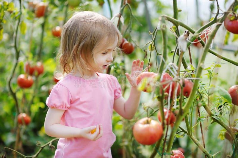 прелестные томаты рудоразборки девушки сада стоковые изображения rf