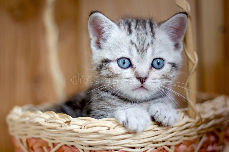 Прелестный маленький котенок сидя в плетеной корзине стоковое изображение rf