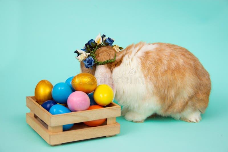 Прелестный меховой зайчик пасхи в плетеной корзине и покрашенные яйца на tiffany голубой предпосылке стоковая фотография