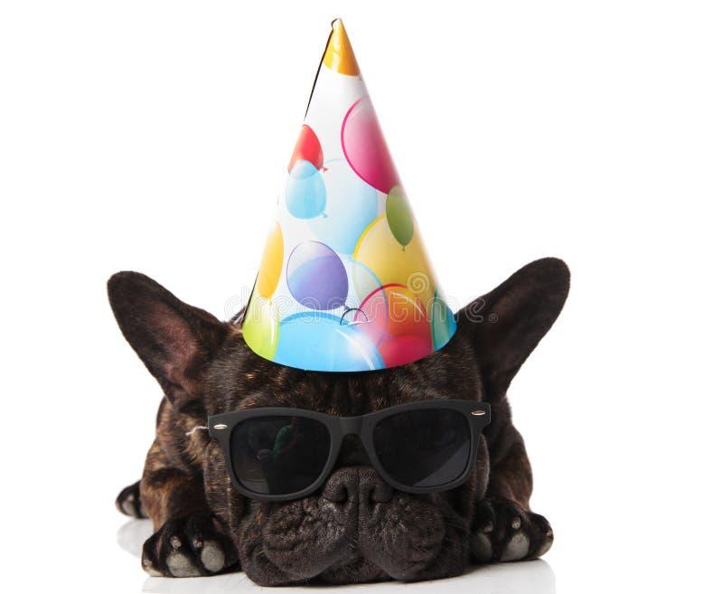 Прелестный отдыхать шляпы и солнечных очков дня рождения французского бульдога нося стоковое изображение rf