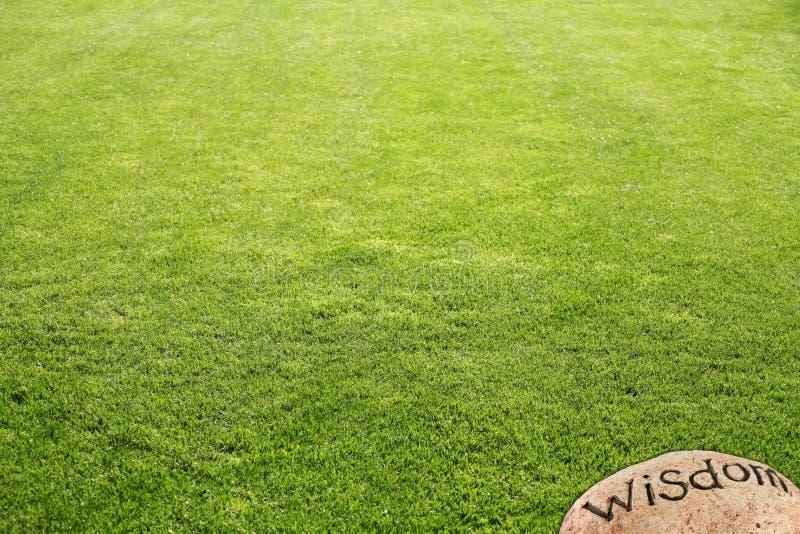 премудрость утеса травы стоковые изображения