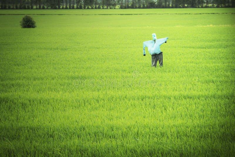 Премудрость земледелия и чучела фермеров стоковое фото