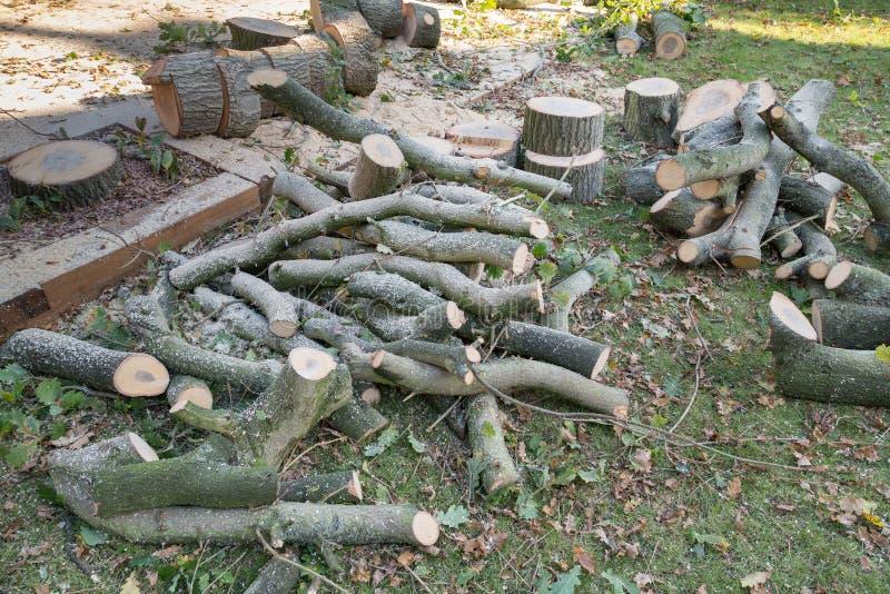 Прерванная древесина от валить дуба стоковые фотографии rf