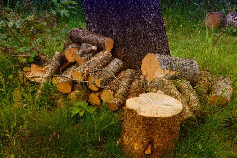 Прерванные древесины стоковые изображения rf