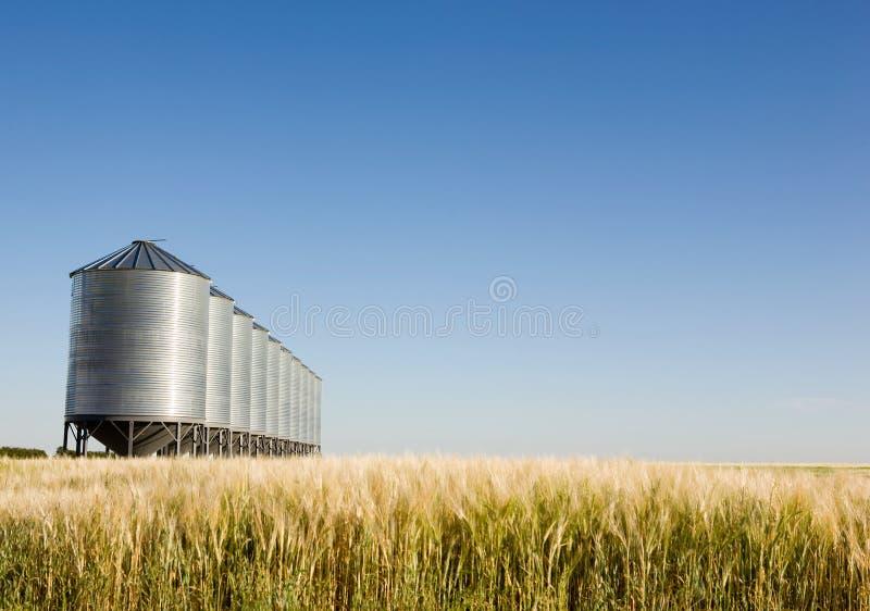 прерия хлебоуборки стоковые фотографии rf