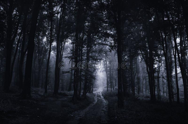 Преследовать лес на ноче при дорога идя через пугающие деревья стоковая фотография