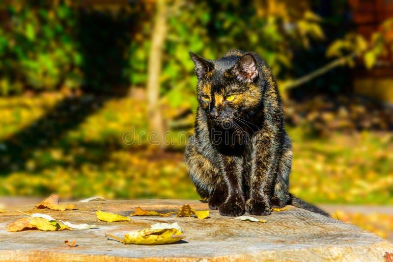Преследуя кот скрывается на добыче на пне стоковые изображения rf