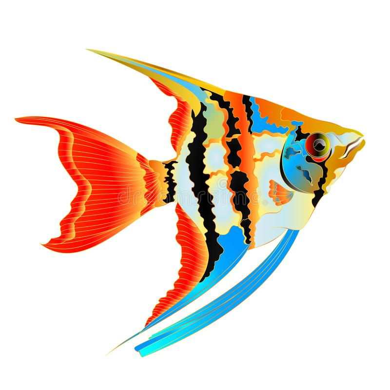 Пресноводные рыбы аквариума Angelfish разнообразия Pterophyllum Scalare амазонские изолированные на иллюстрации вектора белой пре бесплатная иллюстрация