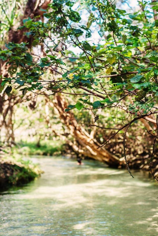 Пресноводный поток, заводь Eli, остров Fraser стоковые фото
