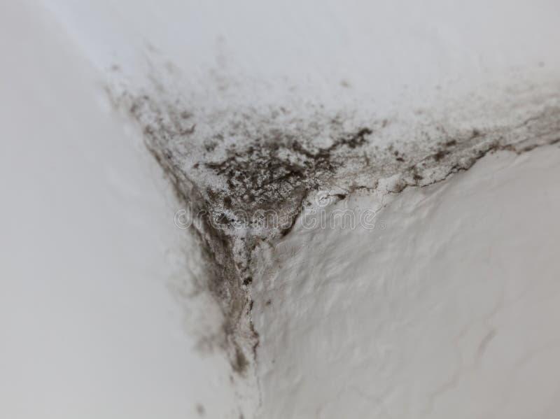 Прессформа в угле стоковое изображение