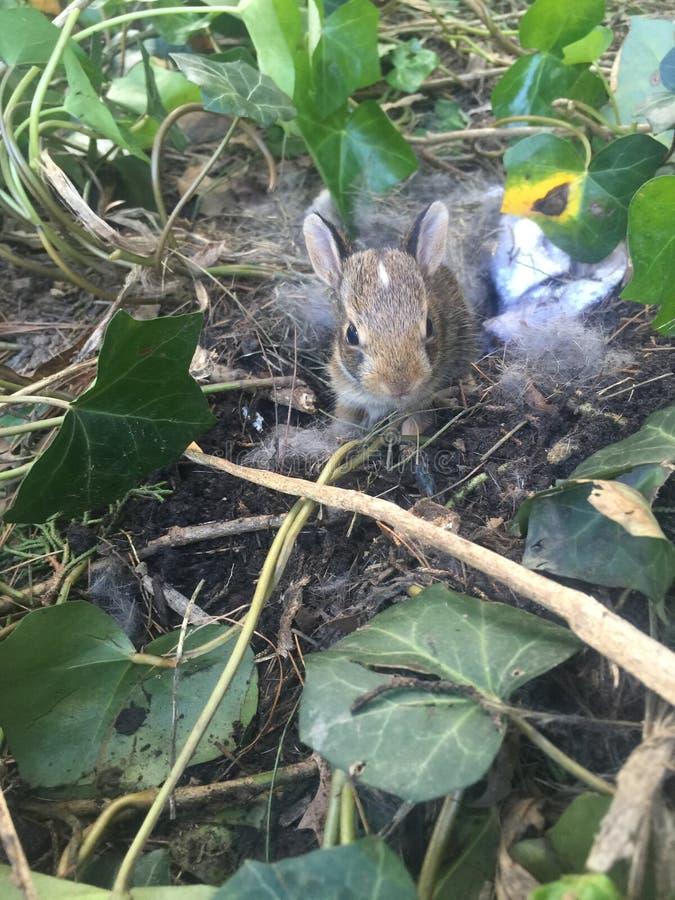 Прелестный зайчик младенца стоковое фото