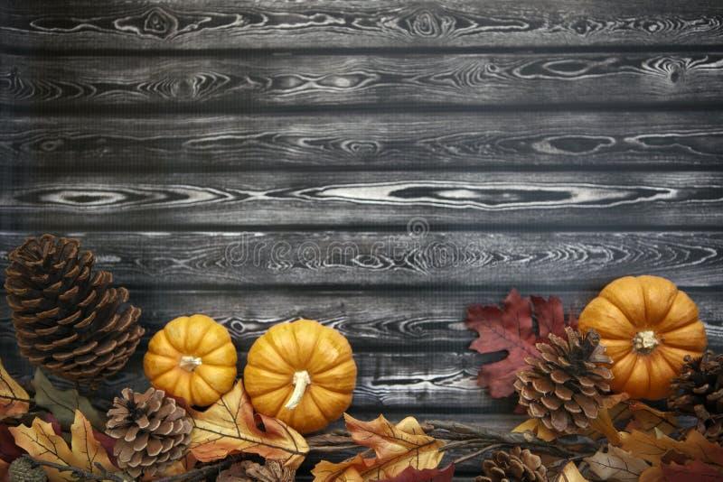 Предпосылка благодарения осени стоковое изображение