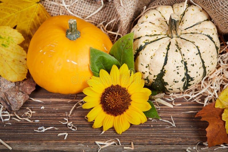 Предпосылка благодарения с тыквами и солнцецветом стоковые фотографии rf