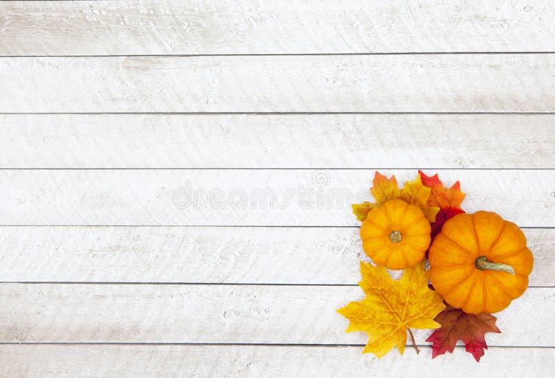 Предпосылка благодарения тыквы осени стоковые изображения