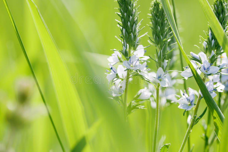 Предпосылка весны или природы лета абстрактная стоковая фотография
