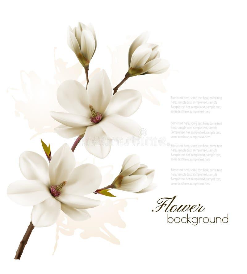 Предпосылка весны с завтрак-обедом цветения белой магнолии иллюстрация штока