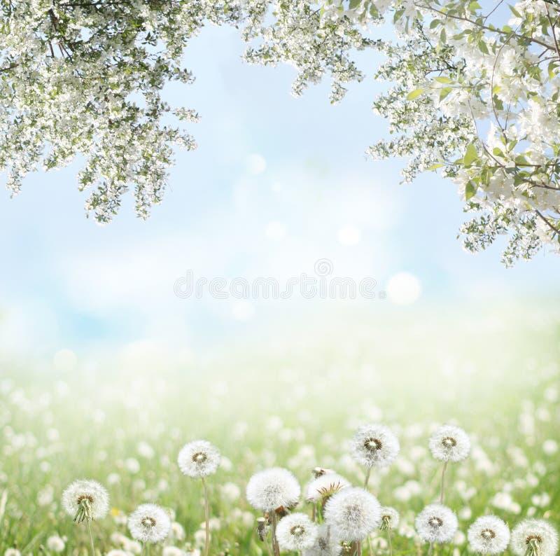 Предпосылка весны стоковая фотография