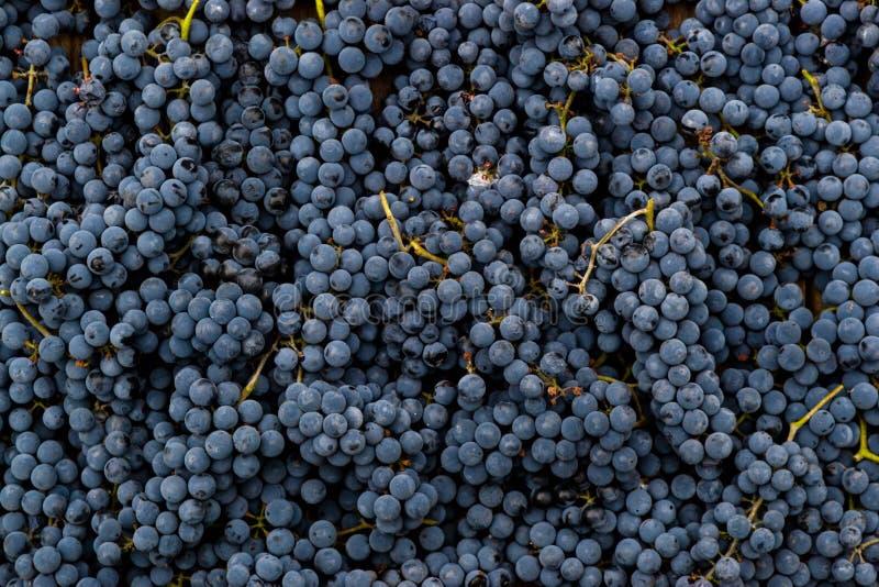 Предпосылка виноградин красного вина стоковая фотография