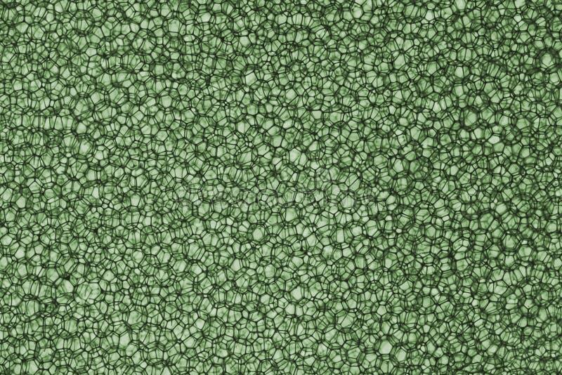 Предпосылка губки в зеленом цвете стоковое фото rf