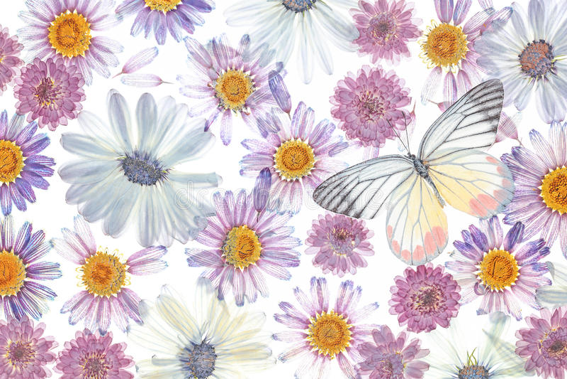 Предпосылка лепестков цветка стоковое фото rf