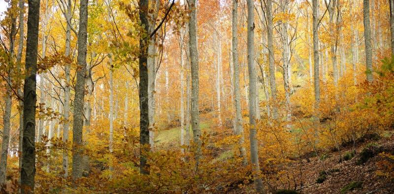 Предпосылка леса осени стоковое изображение rf