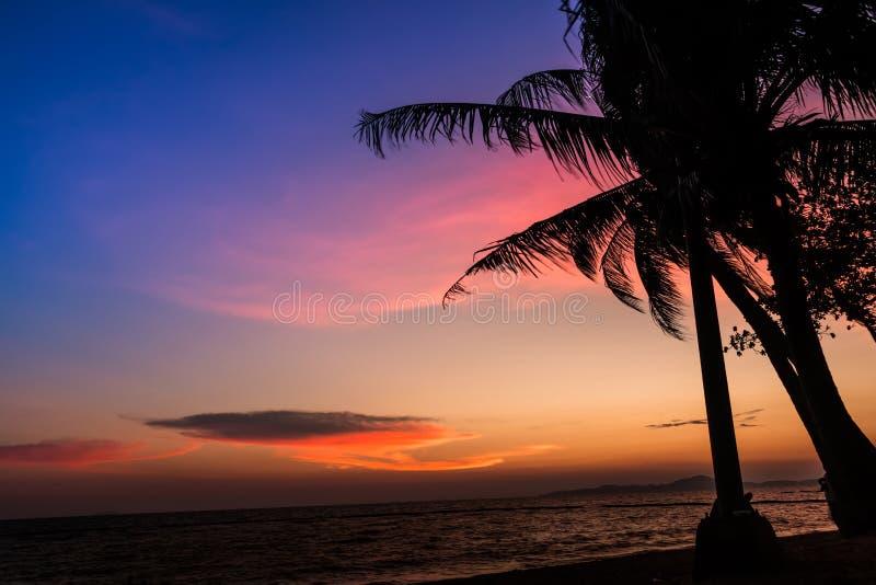 Предпосылка захода солнца силуэта кокосовой пальмы стоковая фотография rf
