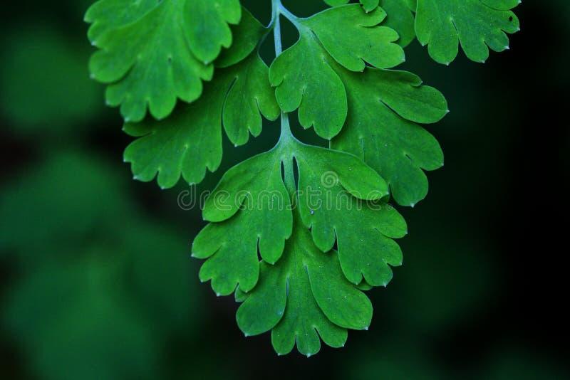 Предпосылка зеленой листвы листьев папоротников тропическая. Дождевой лес стоковые фотографии rf