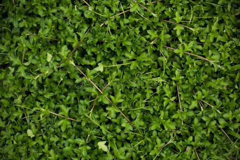 Предпосылка зеленой травы, угол виньетки стоковые изображения