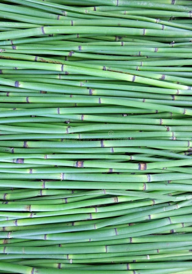 Предпосылка зеленых валов стоковая фотография rf